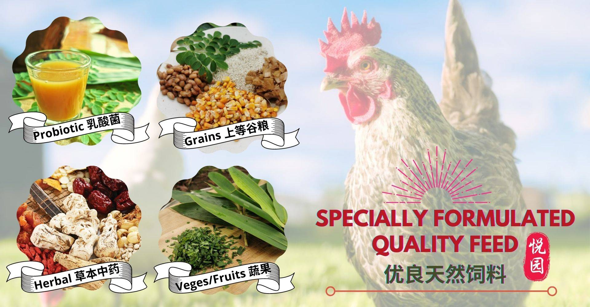 Special Formulated Quality Feed